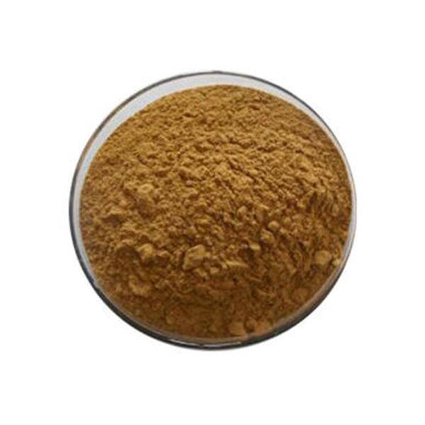 Antrodia Camphorata Extract